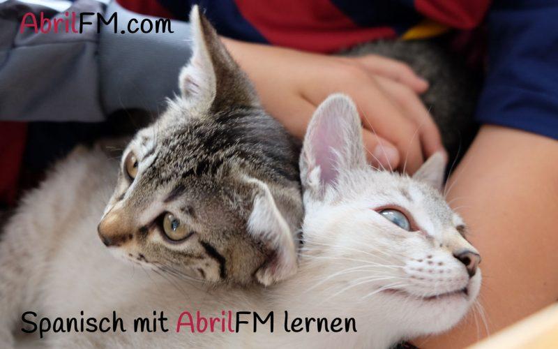 53. Die Katze- Spanisch mit AbrilFM lernen