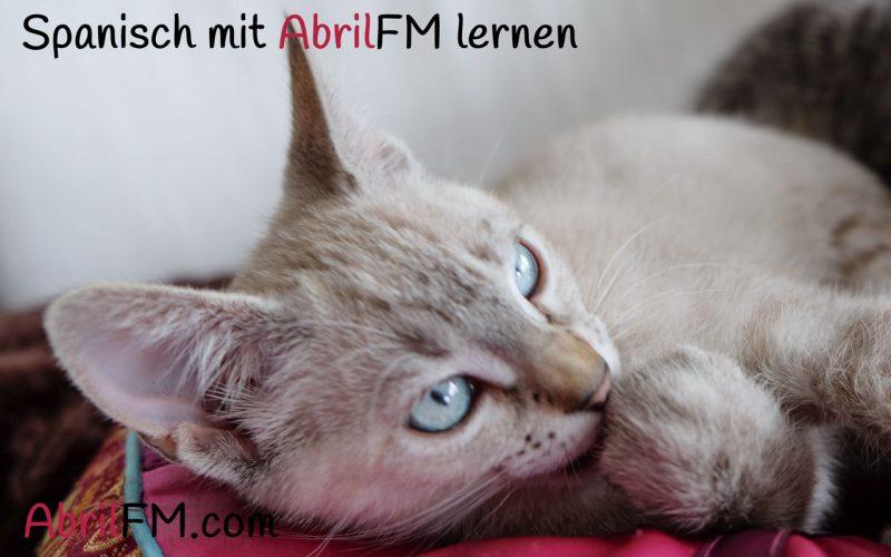 54. Die Katze- Spanisch mit AbrilFM lernen