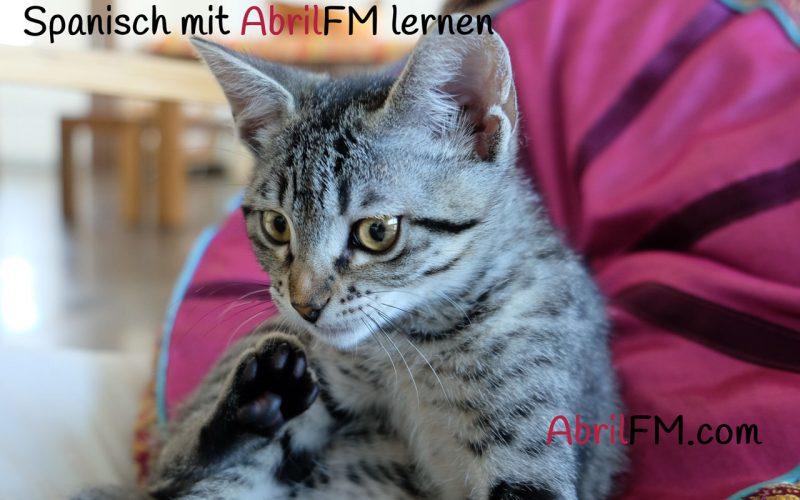 55. Die Katze- Spanisch mit AbrilFM lernen