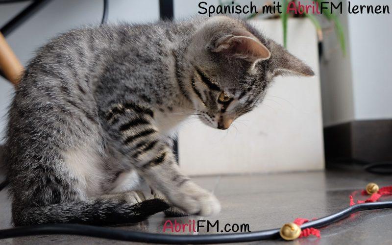 57. Die Katze- Spanisch mit AbrilFM lernen