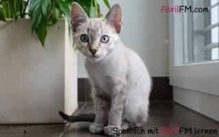 58. Die Katze- Spanisch mit AbrilFM lernen