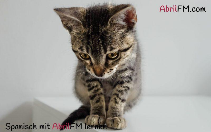 59. Die Katze- Spanisch mit AbrilFM lernen