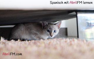 6. Die Katze- Spanisch mit AbrilFM lernen