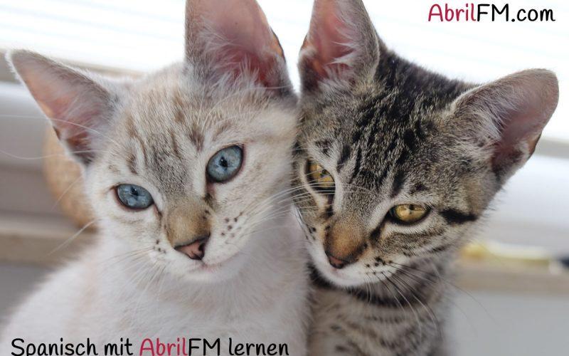 60. Die Katze- Spanisch mit AbrilFM lernen