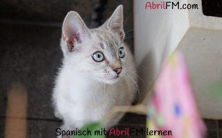 62. Die Katze- Spanisch mit AbrilFM lernen