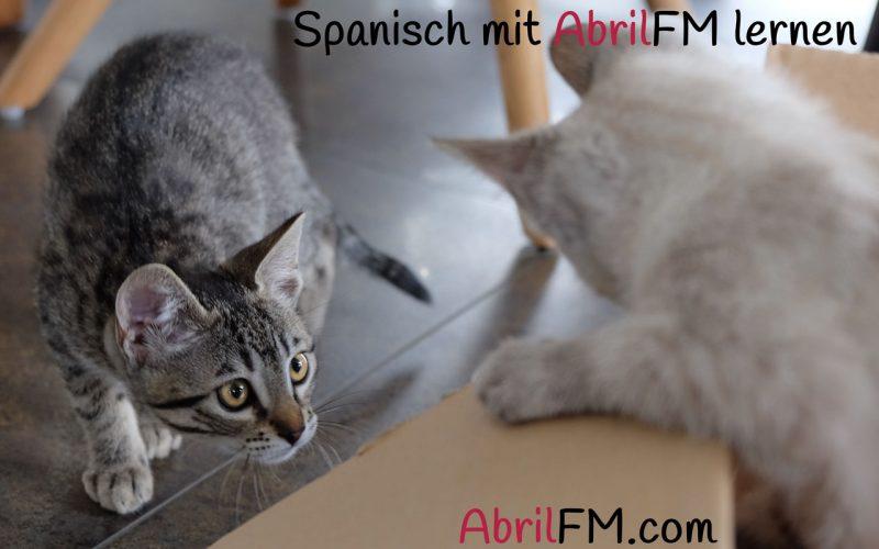63. Die Katze- Spanisch mit AbrilFM lernen