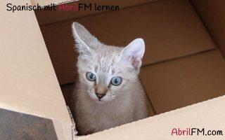 64. Die Katze- Spanisch mit AbrilFM lernen