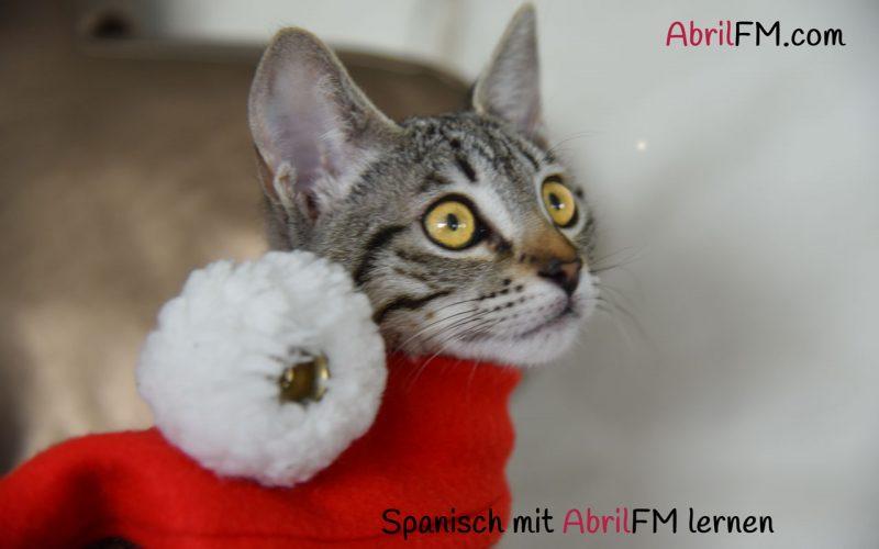 65. Die Katze- Spanisch mit AbrilFM lernen