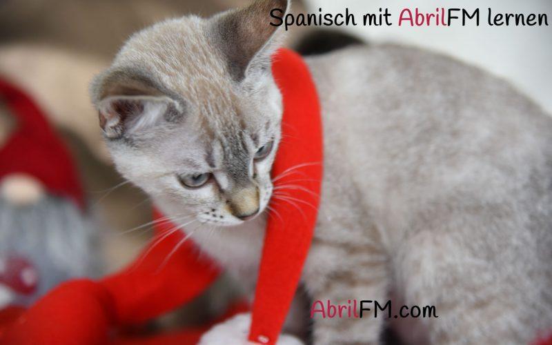 69. Die Katze- Spanisch mit AbrilFM lernen