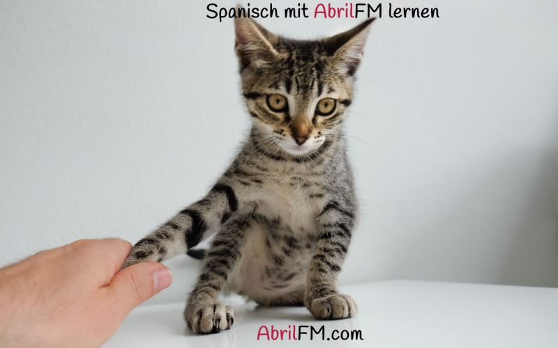 70. Die Katze- Spanisch mit AbrilFM lernen
