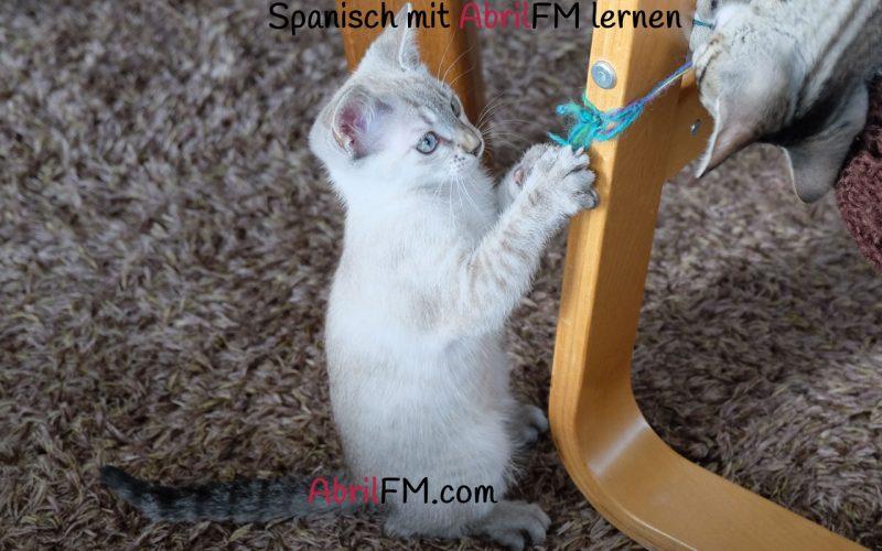 71. Die Katze- Spanisch mit AbrilFM lernen