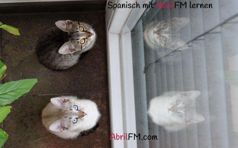 72. Die Katze- Spanisch mit AbrilFM lernen
