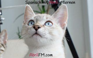 73. Die Katze- Spanisch mit AbrilFM lernen