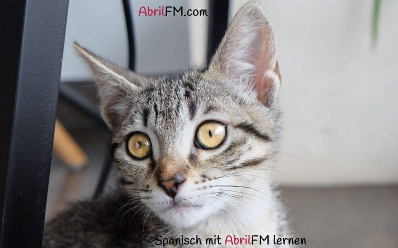 74. Die Katze- Spanisch mit AbrilFM lernen