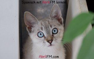 75. Die Katze- Spanisch mit AbrilFM lernen