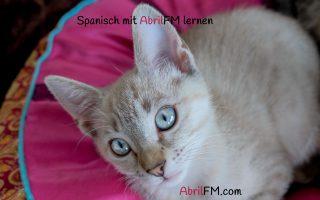 77. Die Katze- Spanisch mit AbrilFM lernen