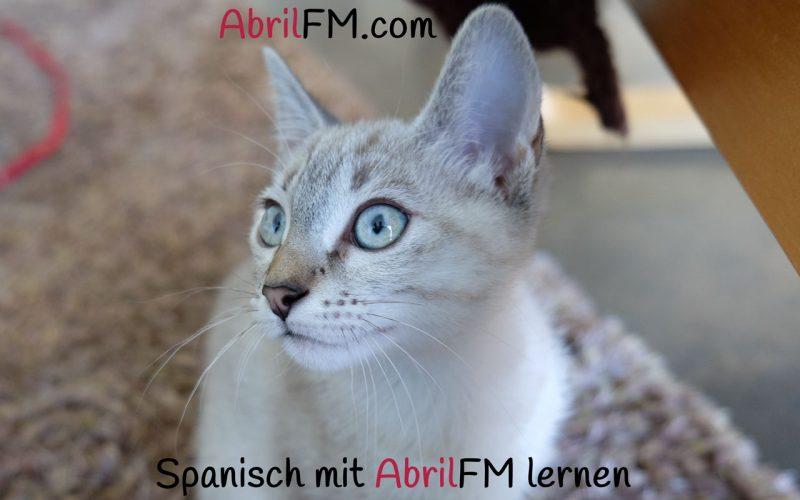 78. Die Katze- Spanisch mit AbrilFM lernen