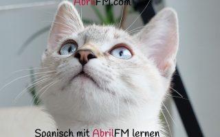 79. Die Katze- Spanisch mit AbrilFM lernen