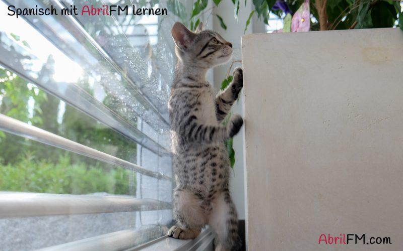 8. Die Katze- Spanisch mit AbrilFM lernen