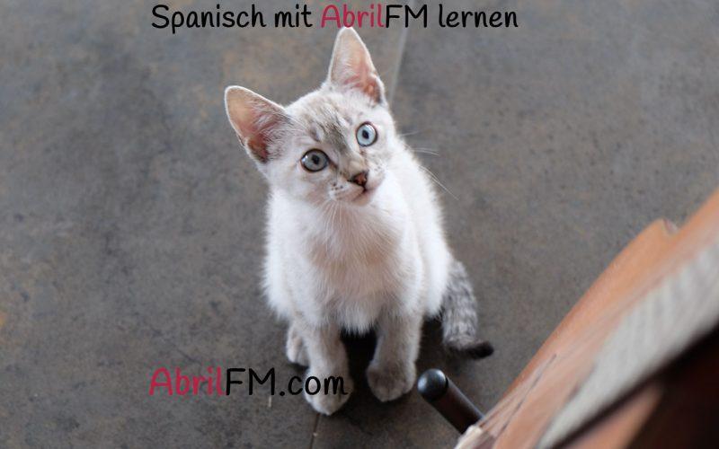 80. Die Katze- Spanisch mit AbrilFM lernen