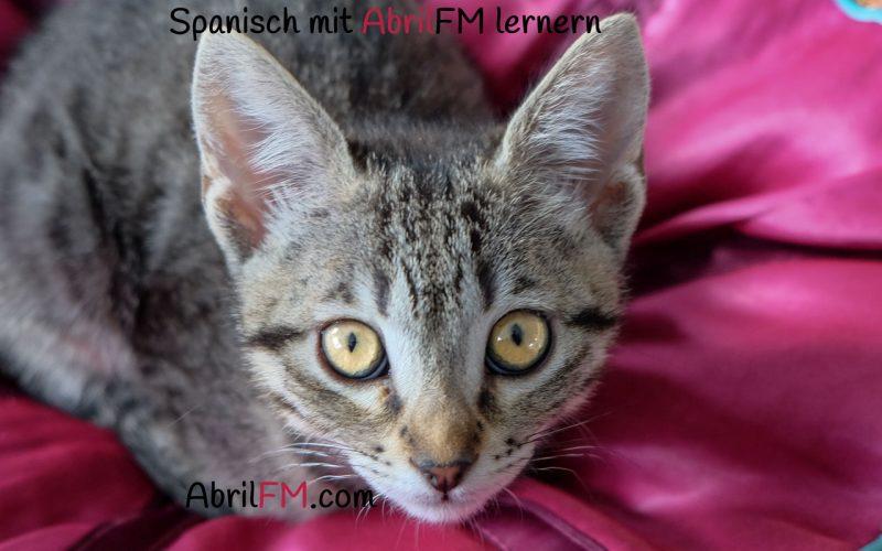 81. Die Katze- Spanisch mit AbrilFM lernen