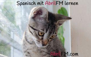 82. Die Katze- Spanisch mit AbrilFM lernen