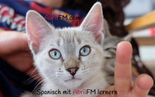 83. Die Katze- Spanisch mit AbrilFM lernen