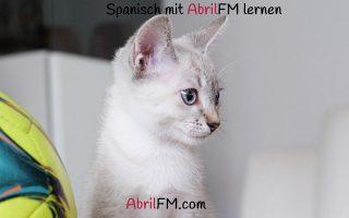 84. Die Katze- Spanisch mit AbrilFM lernen