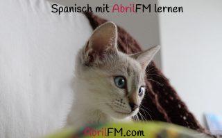 85. Die Katze- Spanisch mit AbrilFM lernen