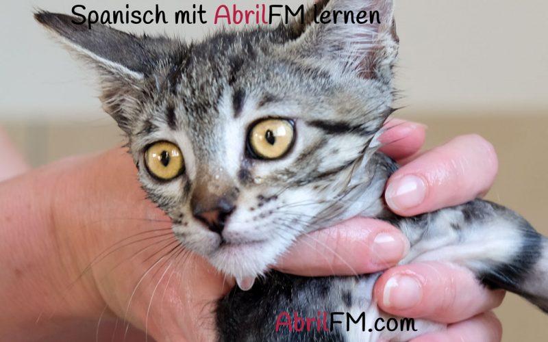 87. Die Katze- Spanisch mit AbrilFM lernen