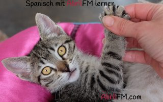 88. Die Katze- Spanisch mit AbrilFM lernen