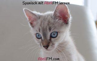 89. Die Katze- Spanisch mit AbrilFM lernen