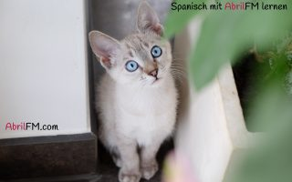 9. Die Katze- Spanisch mit AbrilFM lernen