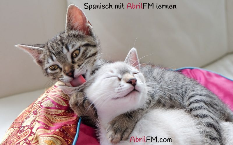 90. Die Katze- Spanisch mit AbrilFM lernen