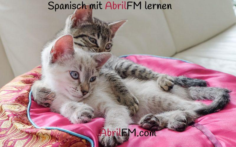 91. Die Katze- Spanisch mit AbrilFM lernen