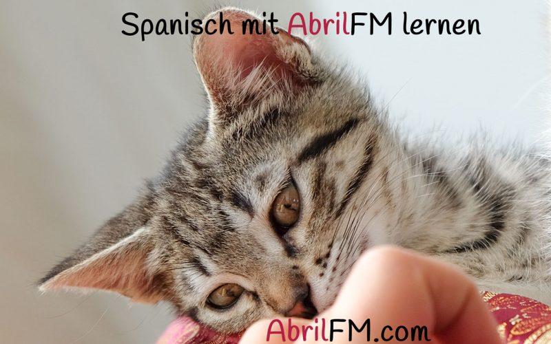 92. Die Katze- Spanisch mit AbrilFM lernen