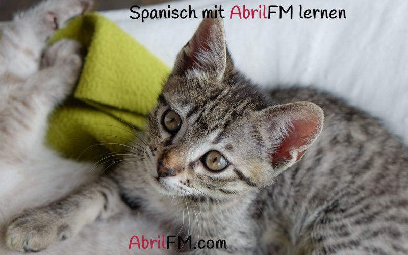 93. Die Katze- Spanisch mit AbrilFM lernen