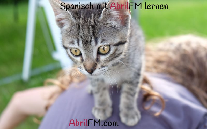 94. Die Katze- Spanisch mit AbrilFM lernen