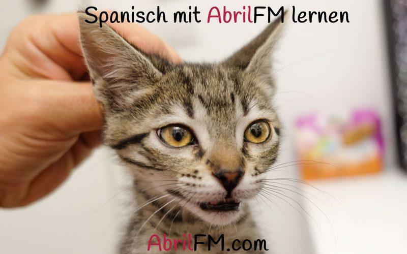 96. Die Katze- Spanisch mit AbrilFM lernen