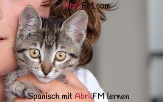 97. Die Katze- Spanisch mit AbrilFM lernen