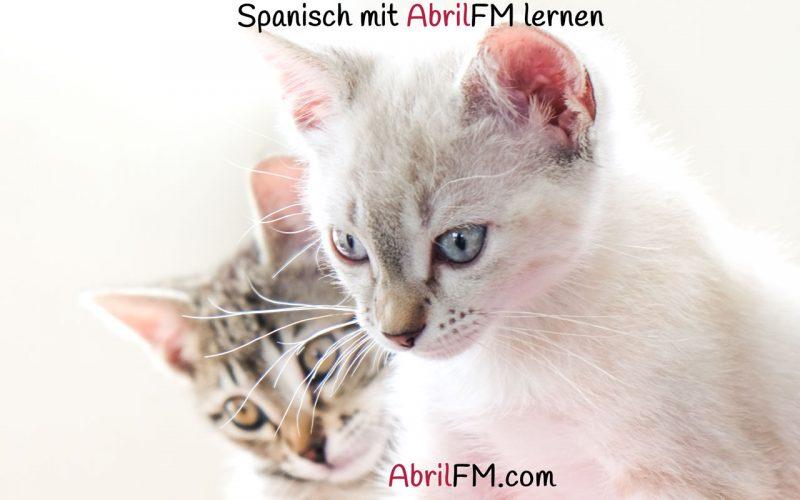 98. Die Katze- Spanisch mit AbrilFM lernen