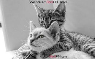 99. Die Katze- Spanisch mit AbrilFM lernen